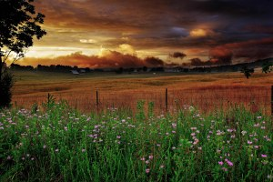 Wv-heavenly-sunset-farm-scene_-_Virginia_-_ForestWander